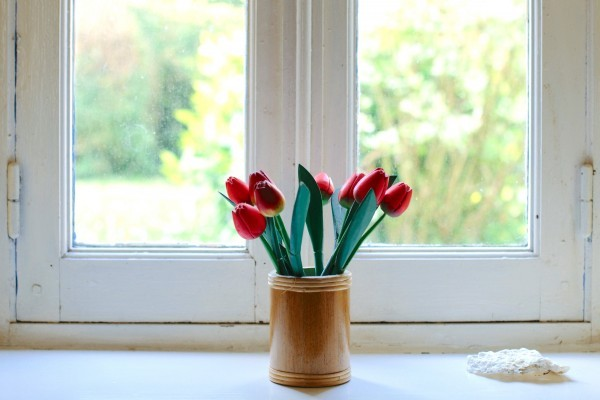 window-window-frame-vase